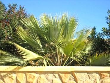 palmen voor buiten kopen